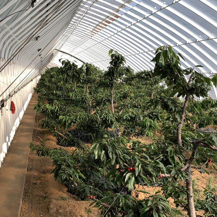智能温室大棚 温室大棚 蔬菜大棚 养殖大棚 智能温室大棚价格